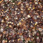 Löv.jpg